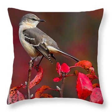 Mockingbird On Red Throw Pillow by William Jobes