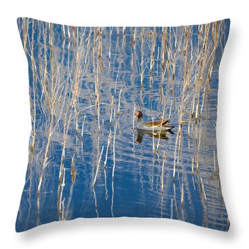 Moorhen In The Reeds Throw Pillow by Carolyn Marshall