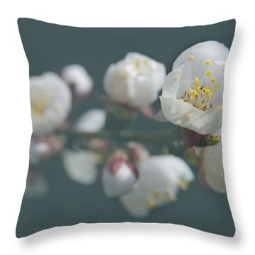 Moorpark Apricot B 4212 Throw Pillow by Michael Peychich