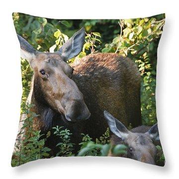 Moose - White Mountains New Hampshire  Throw Pillow by Erin Paul Donovan