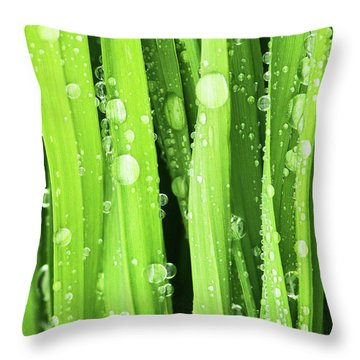 Morning Drops Throw Pillow by Mircea Costina Photography