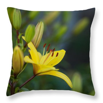 Morning Lily Throw Pillow by Mike Reid