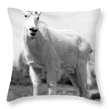 Mountain Goat Throw Pillow by Sebastian Musial