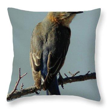 Mrs. Bluebird Throw Pillow by Robert Frederick