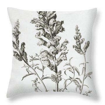Mufle De Veau Throw Pillow by Gerard van Spaendonck