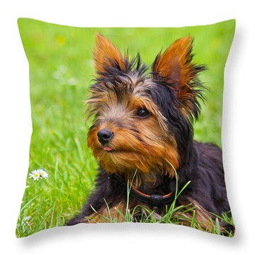 My Little Dog Throw Pillow by Angela Doelling AD DESIGN Photo and PhotoArt