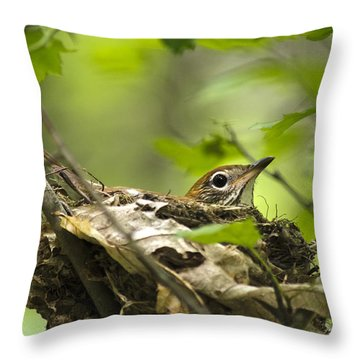 Nesting Birds - Wood Thrush Throw Pillow by Christina Rollo