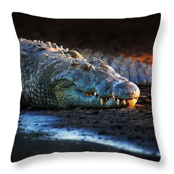Nile Crocodile On Riverbank-1 Throw Pillow by Johan Swanepoel