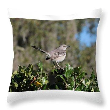 Northern Mockingbird Throw Pillow by Carol Groenen