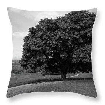 Oak Tree - Killarney National Park Throw Pillow by Aidan Moran