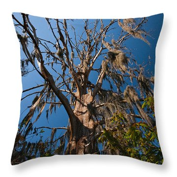 Old Cypress Throw Pillow by Christopher Holmes