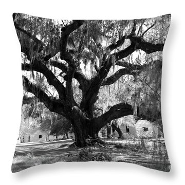 Old Plantation Tree Throw Pillow by Melody Jones