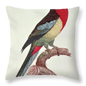 Omnicolored Parakeet Throw Pillow by Jacques Barraband
