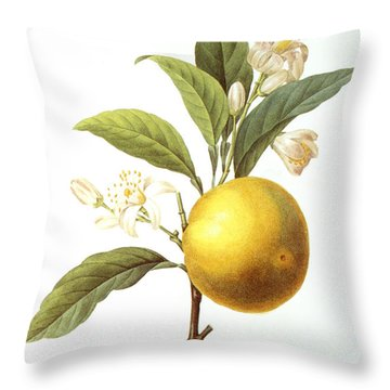 Orange Tree Throw Pillow by Granger