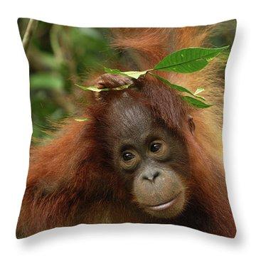 Orangutan Pongo Pygmaeus Baby, Camp Throw Pillow by Thomas Marent