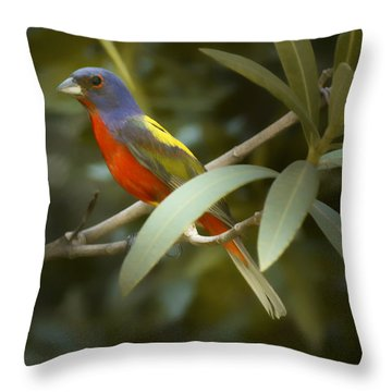 Painted Bunting Male Throw Pillow by Phill Doherty