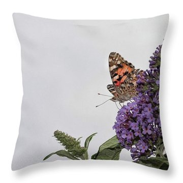 Painted Lady (vanessa Cardui) Throw Pillow by John Edwards