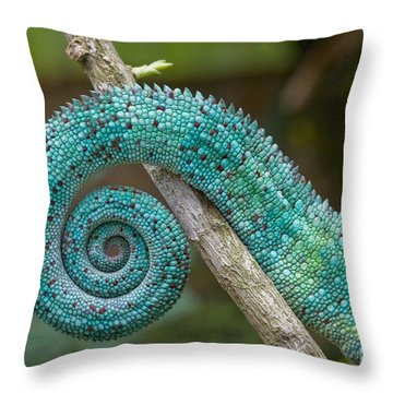 Panther Chameleon Tail Throw Pillow by Philippe Psaila and Photo Researchers