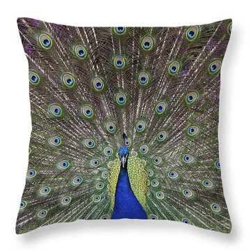 Peacock Display Throw Pillow by Tim Gainey