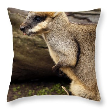 Peeking At The World Throw Pillow by Mike  Dawson