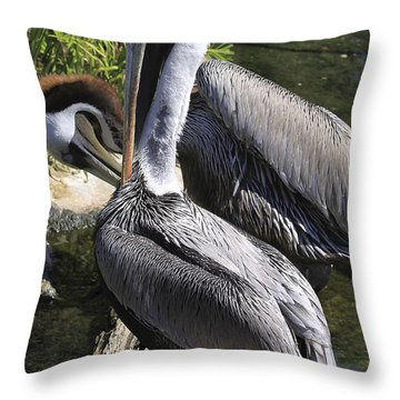 Pelican Duo Throw Pillow by Deborah Benoit