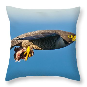 Peregrine Falcon 2 Throw Pillow by Michael  Nau
