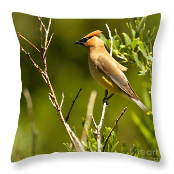 Perfectly Perched Throw Pillow by Adam Jewell