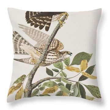 Pigeon Hawk Throw Pillow by John James Audubon