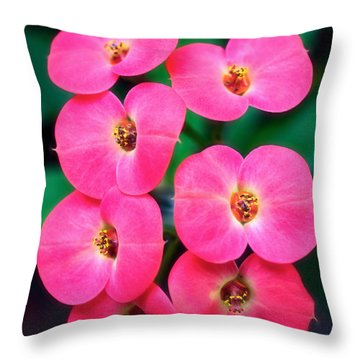 Pink Orchid Crown Of Thorns Throw Pillow by Sue Melvin