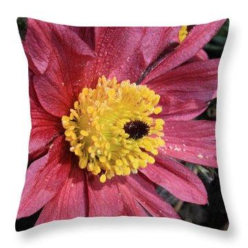 Pink Pasque Flower Throw Pillow by Carol Groenen