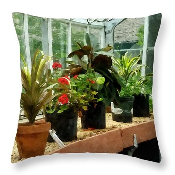 Plants In Greenhouse Throw Pillow by Susan Savad