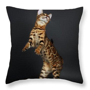 Playful Female Bengal Cat Stands On Rear Legs Throw Pillow by Sergey Taran