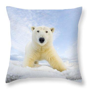 Polar Bear  Ursus Maritimus , Curious Throw Pillow by Steven Kazlowski