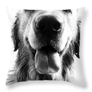 Portrait Of A Happy Dog Throw Pillow by Osvaldo Hamer