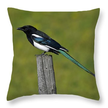 Prairie Perch Throw Pillow by Tony Beck