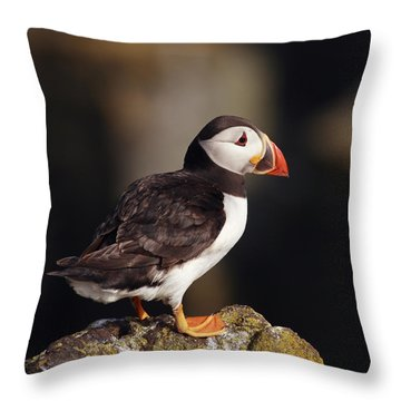 Puffin On Rock Throw Pillow by Grant Glendinning