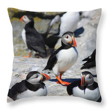 Puffins At Rest Throw Pillow by John Burk
