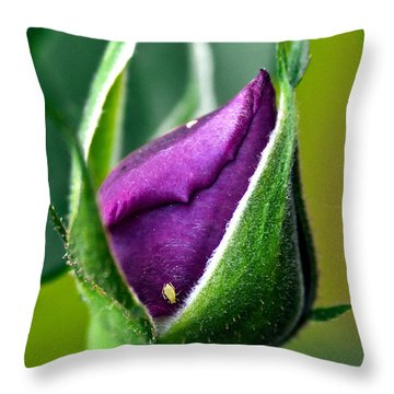 Purple Rose Bud Throw Pillow by Christopher Holmes