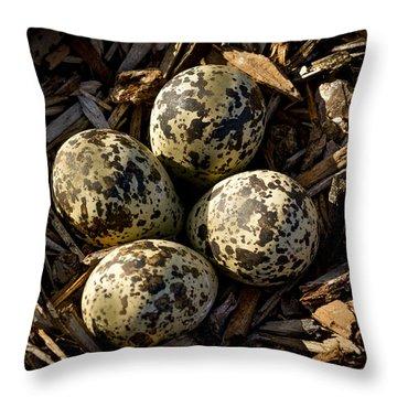 Quartet Of Killdeer Eggs By Jean Noren Throw Pillow by Jean Noren