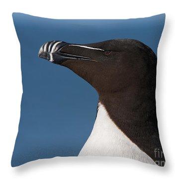 Razorbill Portrait Throw Pillow by Joshua Clark