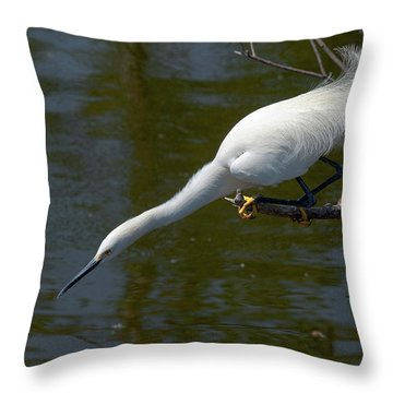 Ready..set.. Throw Pillow by Christopher Holmes
