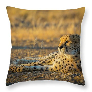 Reclining Cheetah Throw Pillow by Inge Johnsson