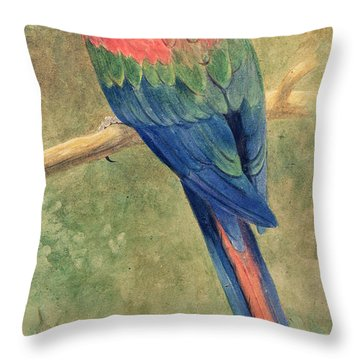 Red And Blue Macaw Throw Pillow by Henry Stacey Marks