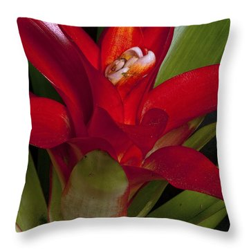 Red Bromiliad Throw Pillow by Christopher Holmes