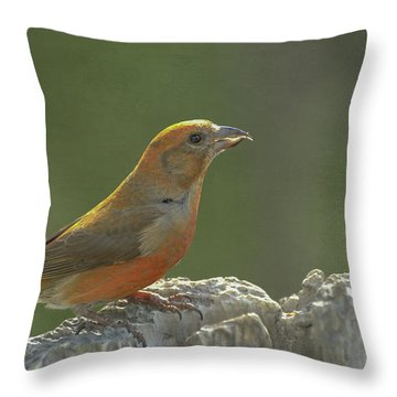 Red Crossbill Throw Pillow by Constance Puttkemery