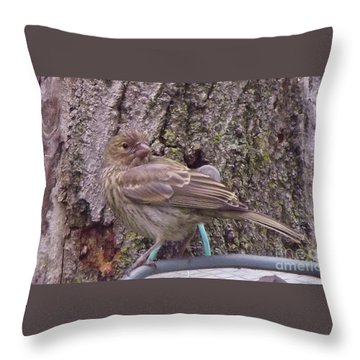Red Crossbill Female  Indiana  Summer Throw Pillow by Rory Cubel