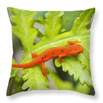 Red Eft Eastern Newt Throw Pillow by Christina Rollo