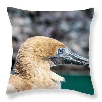Red Footed Booby Juvenile Throw Pillow by Jess Kraft