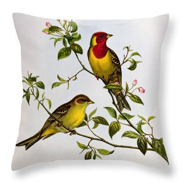 Red Headed Bunting Throw Pillow by John Gould