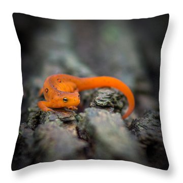 Red Spotted Newt Throw Pillow by Chris Bordeleau